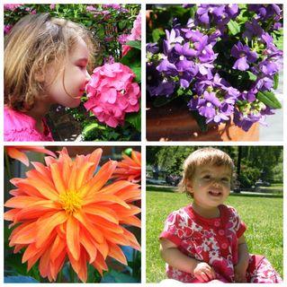 Garden Tour Collage